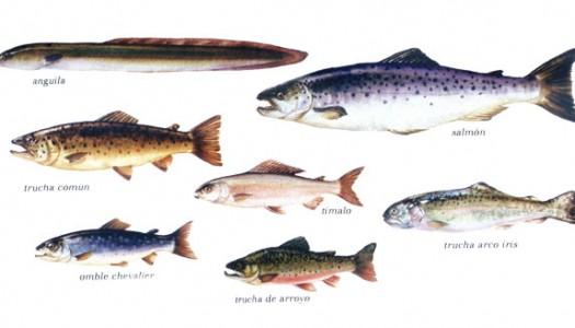 Tabla de pescados de río